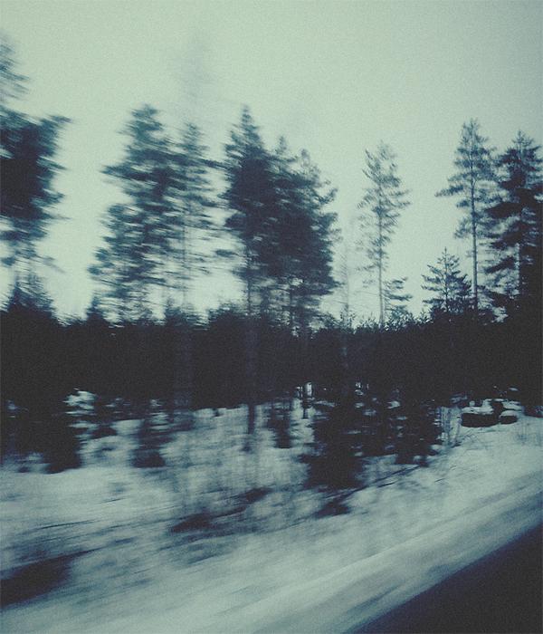 20140117_skog