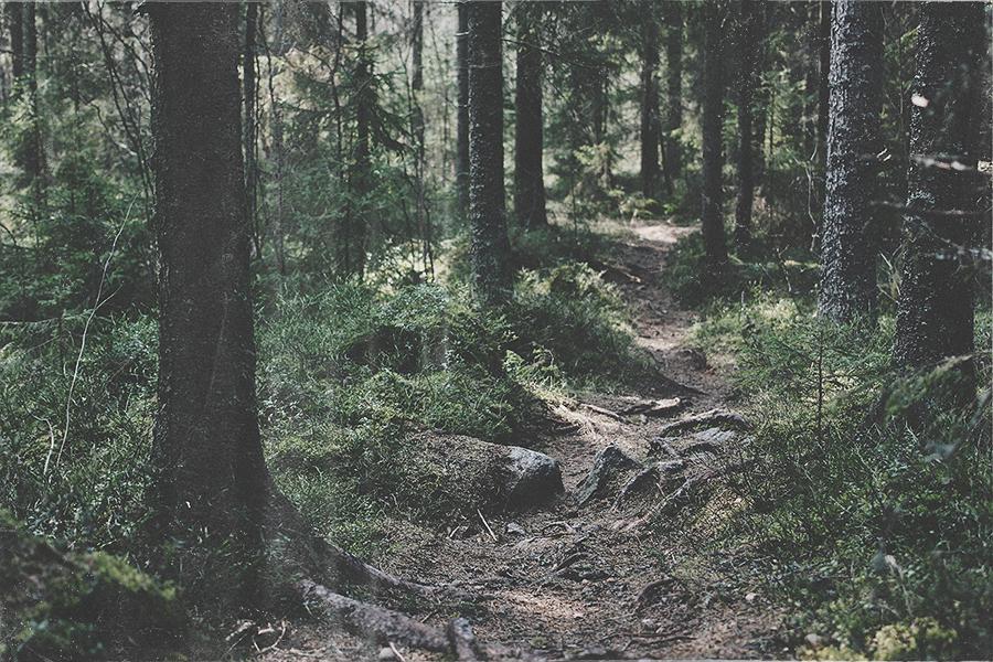 20150412_skog_003