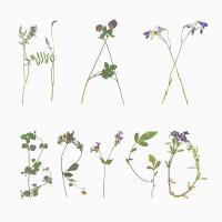 blomsterbokstäver