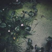 sju sorters blommor i skog och på äng